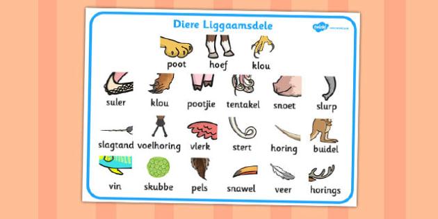 Afrikaans Diere Se Liggaamsdele Woordmat - diere, lighaamsdele, woordeskat