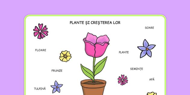 Creșterea plantelor - Planșă de vocabular - cultivarea plantelor, planșă de vocabular, cuvinte, lexic, fișă, predicție, științe, observație, floare, părțile unei plante, creștere, dezvoltare, romanian, materiale, materiale didactice, română, romana,