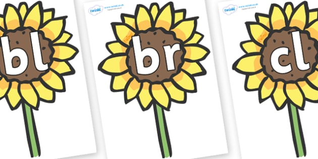 Initial Letter Blends on Sunflowers - Initial Letters, initial letter, letter blend, letter blends, consonant, consonants, digraph, trigraph, literacy, alphabet, letters, foundation stage literacy