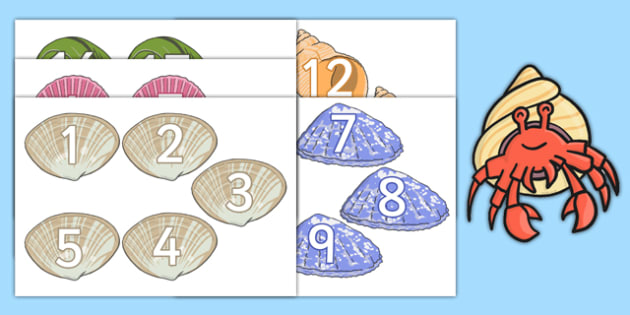 Number Shells Resource Pack - number, shells, resource, pack