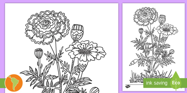 Hola de colorear: Flor de Cálendula del Día de los Muertos - Día de los