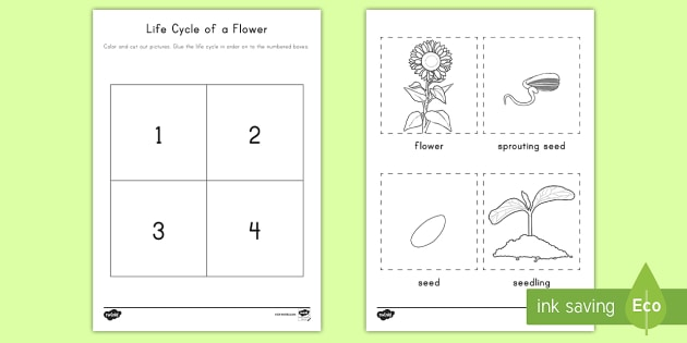 Life Cycle Of A Flower Cut And Paste Worksheet Activity Sheet