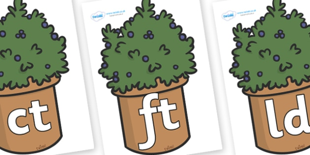 Final Letter Blends on Plants - Final Letters, final letter, letter blend, letter blends, consonant, consonants, digraph, trigraph, literacy, alphabet, letters, foundation stage literacy