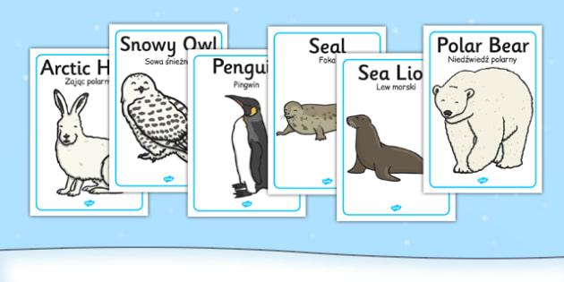 Polar Regions Animals Display Posters Polish Translation - polish, arctic, animals, display posters, display, posters