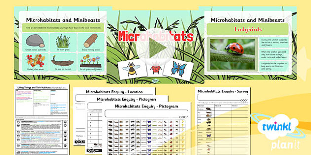 Science: Living Things and Their Habitats: Microhabitats Year 2 Lesson 3