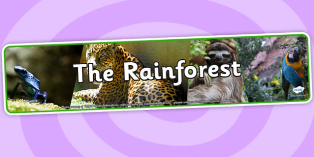 The Rainforest Photo Display Banner - the rainforest, photo display banner, photo banner, display banner, banner,  banner for display, display photo, display