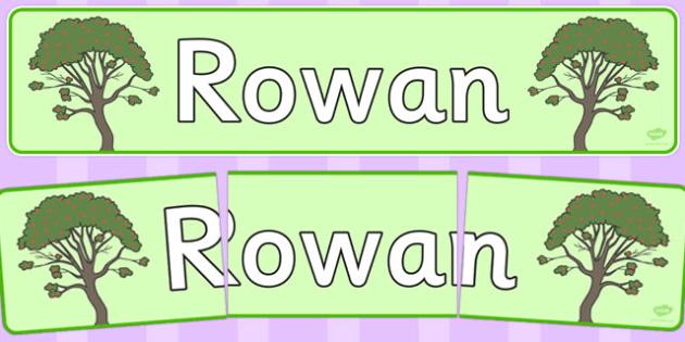 Rowan Display Banner - tree, rowan, nature, banner, display, woods, header, forest