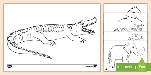 Jungle Animal-Themed Story Coloring Sheets (teacher Made)