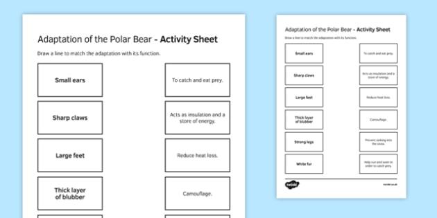 Polar Bear Feet Diagram Labeled - Electrical Work Wiring Diagram •