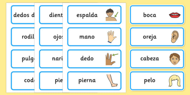 Tarjetas de vocabulario Las partes del cuerpo - las partes del cuerpo