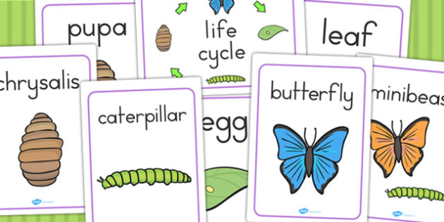 Life Cycle of a Butterfly Display Posters - life cycles, poster