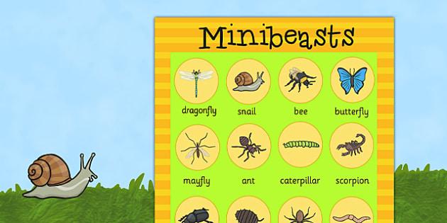 Large Minibeasts Display Poster - minibeasts, minibeast display