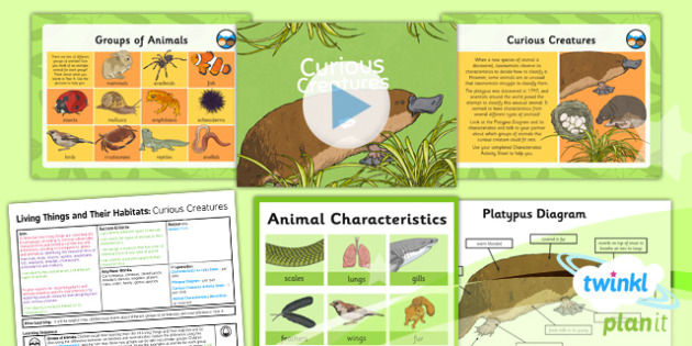 Science: Living Things and Their Habitats: Curious Creatures Year 6 Lesson Pack 3