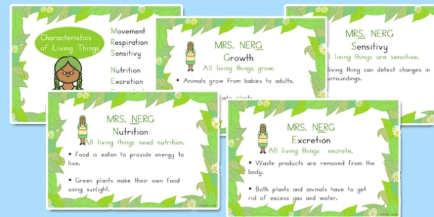 Mrs Nerg Life Processes Characteristics of Living Things Flash Cards