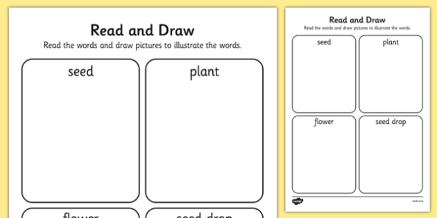 Life Cycle of a Sunflower Read and Draw Sheet - EYFS, Early Years, Literacy, plants and growth