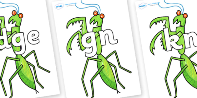 Silent Letters on Praying Mantis to Support Teaching on The Bad Tempered Ladybird - Silent Letters, silent letter, letter blend, consonant, consonants, digraph, trigraph, A-Z letters, literacy, alphabet, letters, alternative sounds