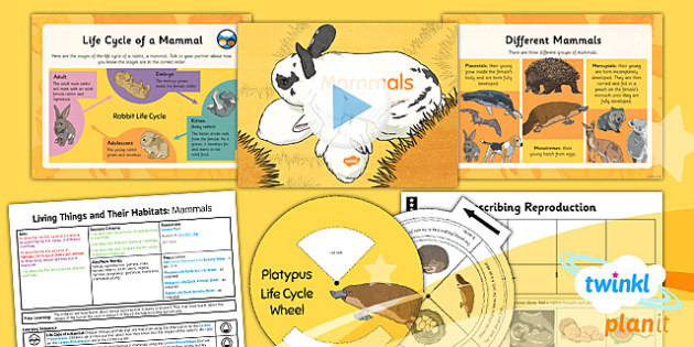 Science: Living Things & Habitats: Mammals Year 5 Lesson Pack 3