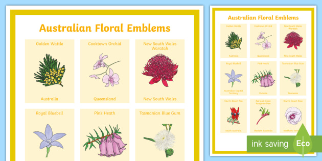 Australian Floral Emblems Display Poster Australia