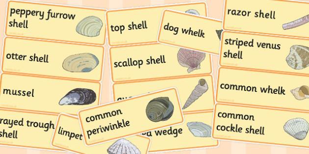British Seashell Word Cards - british, seashell, word cards, card