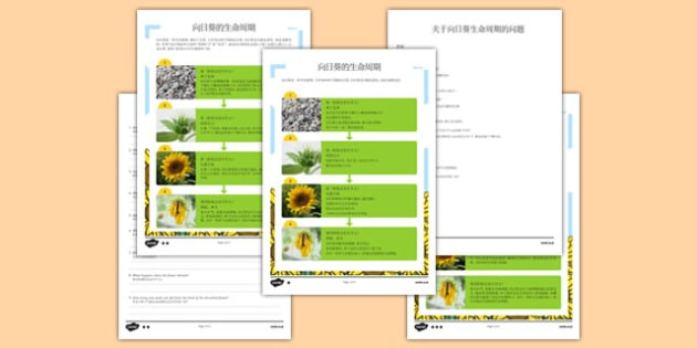 向日葵的生命周期阅读理解