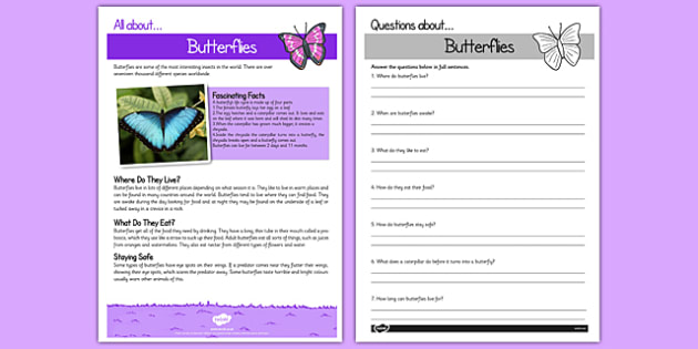 Butterfly Reading Comprehension - butterfly, reading, comprehension