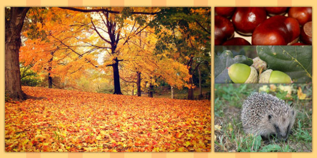 Autumn Photo Clip Art Pack - autumn, photo, pack, season, art