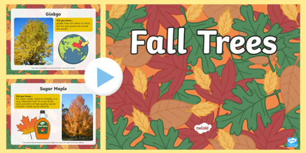 Fall Trees PowerPoint