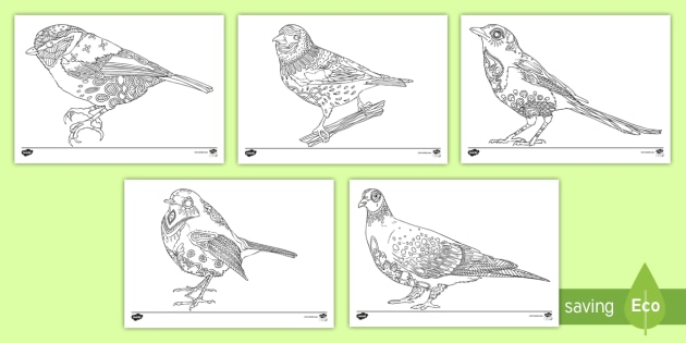British Birds Mindfulness Colouring Pages Big Birdwatch Greatrhtwinklcouk: Colouring Pages With Birds At Baymontmadison.com