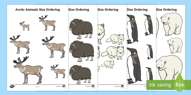 Arctic Animals Size Ordering - The Arctic, Polar Regions, north pole, south pole, explorers, size, size ordering