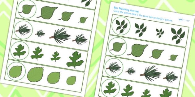 Leaf Size Matching Worksheet - leaf, flower, plant, matching