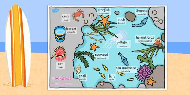 Seaside Rockpool Word Mat Polish Translation - polish, seaside