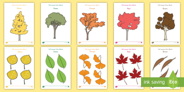 Fall Leaves Color Match Worksheet Activity Sheets fall