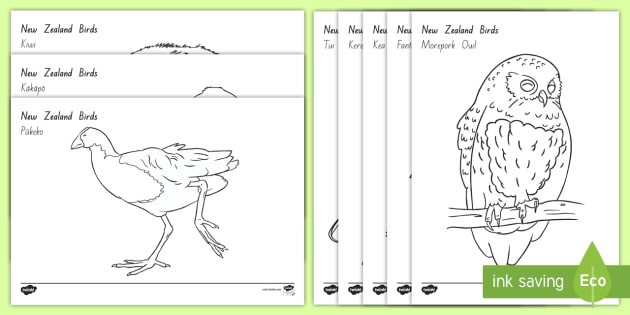 Nz Native Bird Colouring Pages Pack New Zealand Birdsrhtwinklcouk: Colouring Pages With Birds At Baymontmadison.com