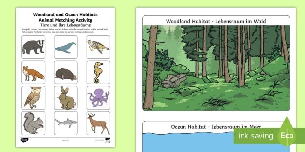 woodland and ocean habitats animal sorting worksheet worksheet. Black Bedroom Furniture Sets. Home Design Ideas