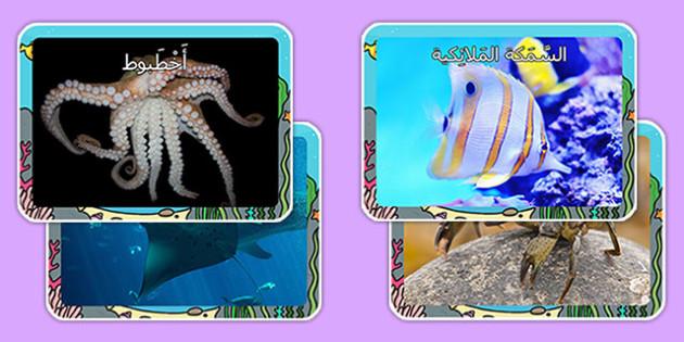 صور عرض مخلوقات بحرية - أسماك، أعماق البحر، موارد تعليمية، عربي