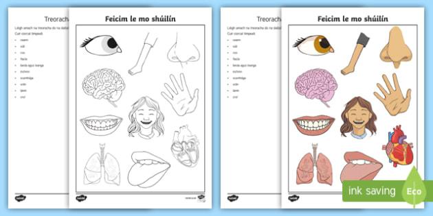 Parts of the Body I Spy Activity Sheet Gaeilge