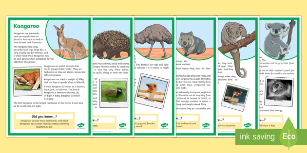 Australian Animals Fact File Display Posters