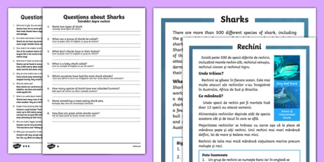 Sharks Differentiated Reading Comprehension Activity Romanian Translation - romanian, Sharks, sea creatures, KS1 reading, non-fiction, information, comprehension, questions, fact file