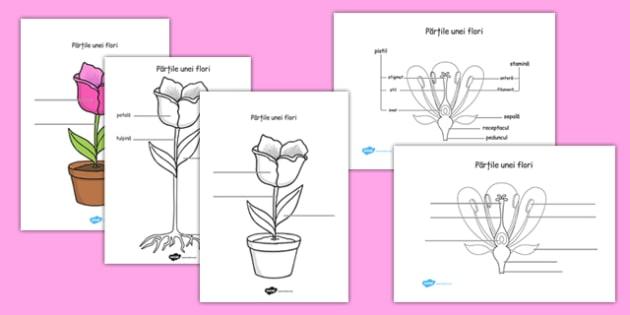 Părțile unei flori - Fișă de lucru