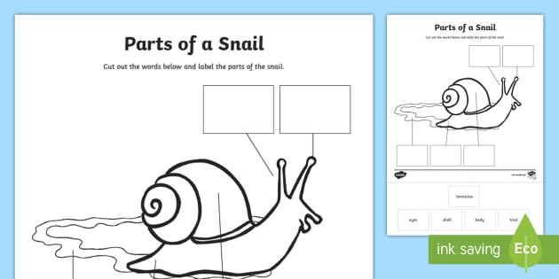Parts Of A Snail Worksheet Activity Sheet Snails Shell