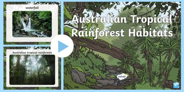 Australian Tropical Rainforest Habitat Photo PowerPoint - australia, Science, Habitats, Australian Curriculum, Tropical, Rainforest, Living, Living Adventure, Good to Grow, Ready Set Grow, Life on Earth, Environment, Living Things, Animals, Plants, P