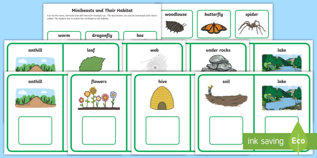 workstation pack minibeasts and their habitat matching activity pack. Black Bedroom Furniture Sets. Home Design Ideas