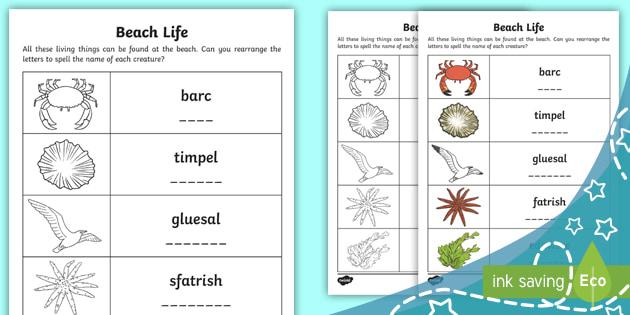 Beach Life Anagrams Worksheet / Worksheet - Worksheet