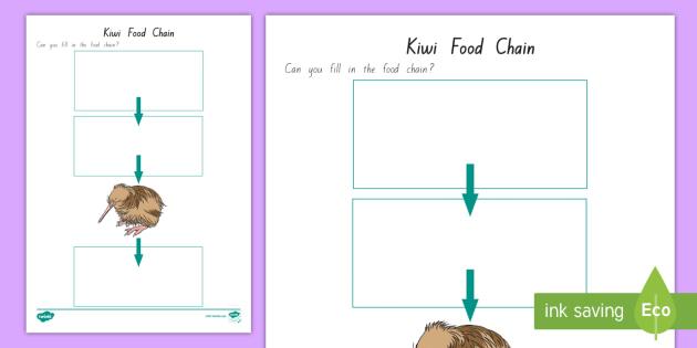 Kiwi Food Chain Activity New Zealand Kiwi Bird Food Chain Native