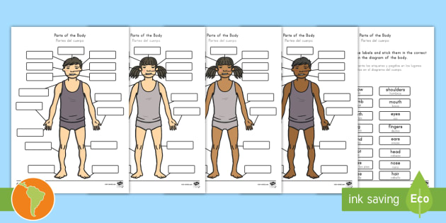Body Parts Labelling Activity US English/Spanish (Latin) - Body