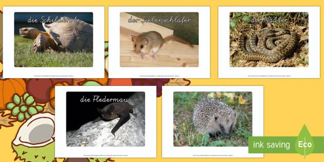 Winterschlaf: Tierfotos Poster DIN A4