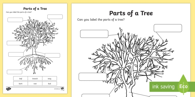the parts of a tree worksheet activity sheet national tree week trees
