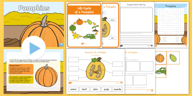 image regarding Pumpkin Life Cycle Printable titled Daily life Cycle of a Pumpkin Match Pack - tumble, autumn