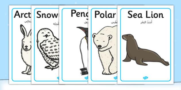 Polar Regions Animals Display Posters Arabic Translation - arabic, arctic, animals, display, posters