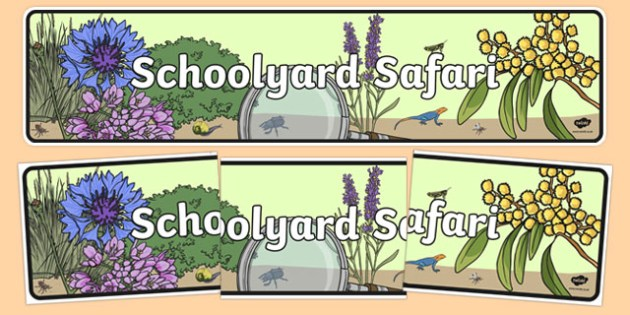 Schoolyard Safari Display Banner - australia, Australian Curriculum, Schoolyard Safari, science, year 1, banner, wall display